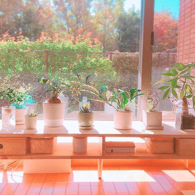 リビングに観葉植物を飾ろう10