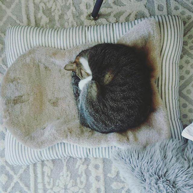 猫のためのリラックス空間を作る5