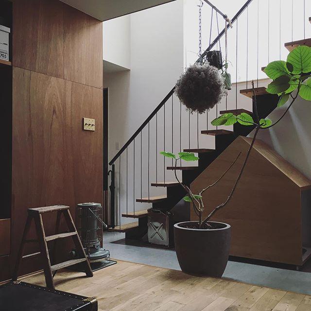 リビングに観葉植物を飾ろう18