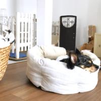 ペットも家族も楽しく過ごしたい♪犬や猫と暮らすインテリアの実例&アイテム集