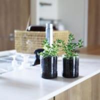 お部屋にグリーンを♪寒い季節でも室内で楽しめる土を使わない植物栽培!