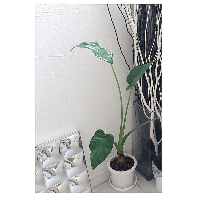 観葉植物特集59
