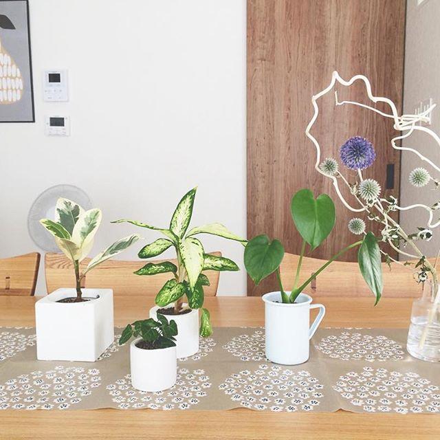 初心者でも簡単に楽しめる観葉植物色々