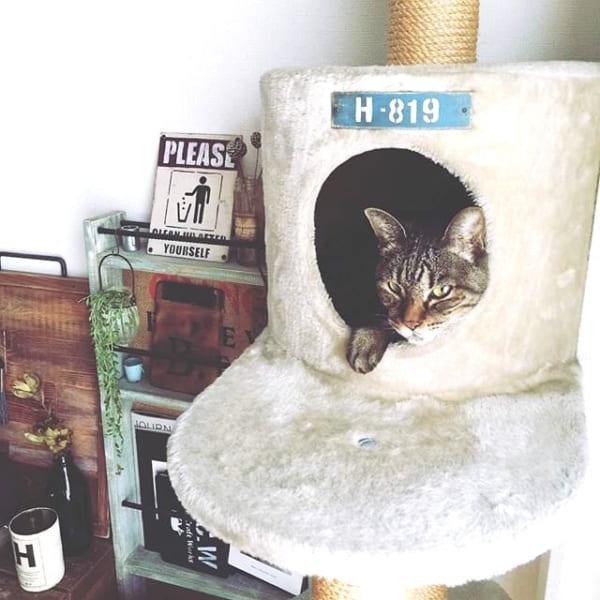 猫 インテリア7