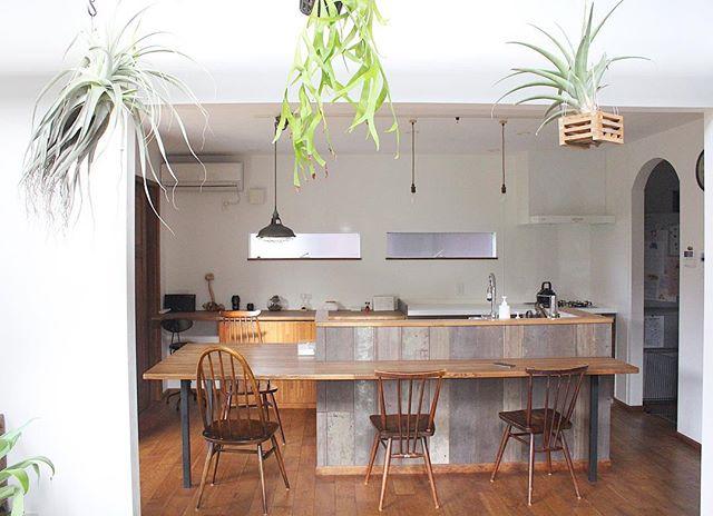 キッチン グリーン2