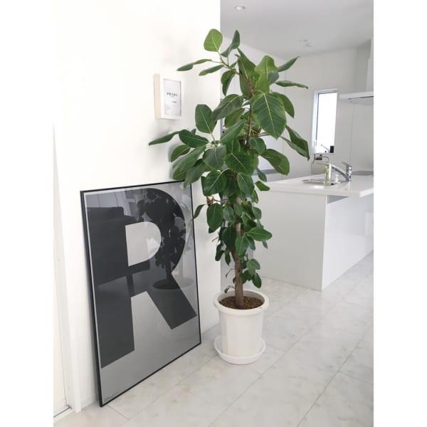 リビングに観葉植物を飾ろう