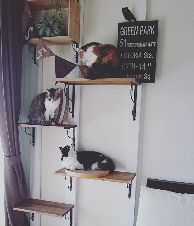 猫 インテリア3