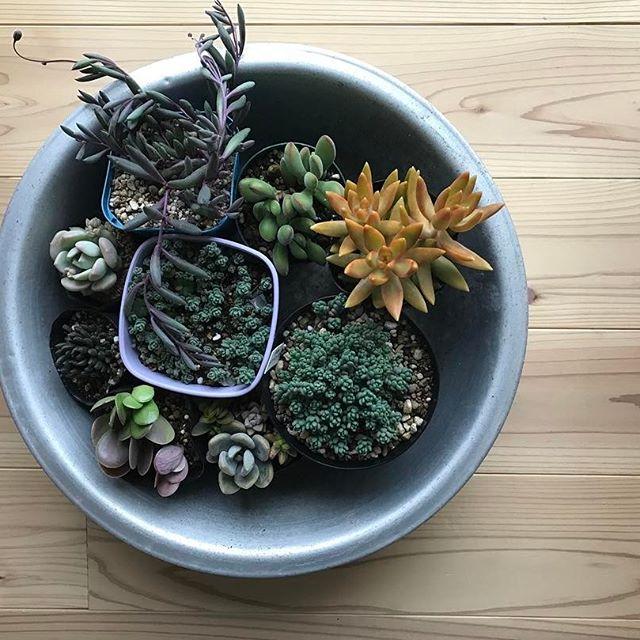 小さな鉢を寄せ集めて