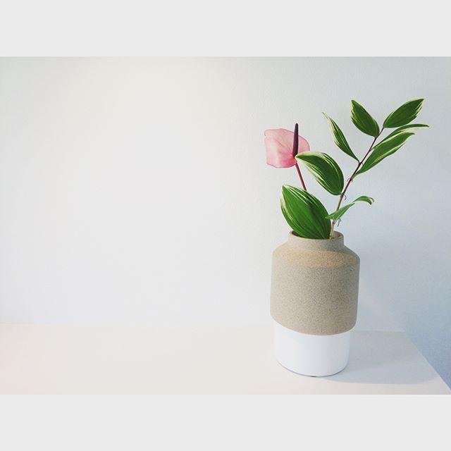 観葉植物特集70
