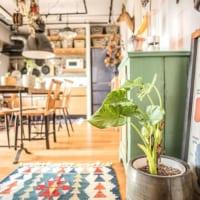 リビングに観葉植物を飾ろう!お部屋の雰囲気が変わる素敵な飾り方とは♪