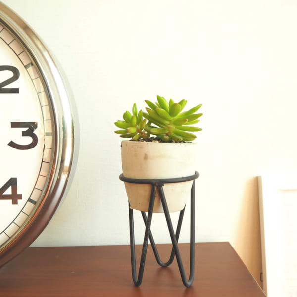 植物 花 鉢9