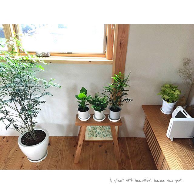 初心者でも簡単に楽しめる観葉植物色々4