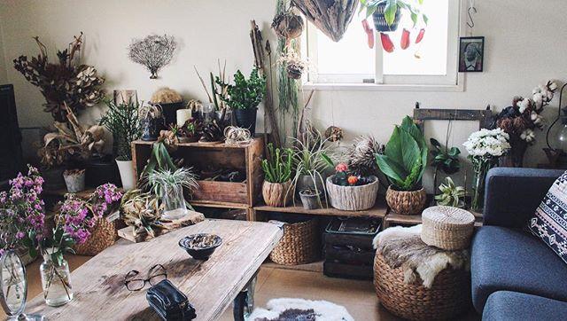 ドライフラワーや観葉植物などで狭い部屋を癒し空間に2