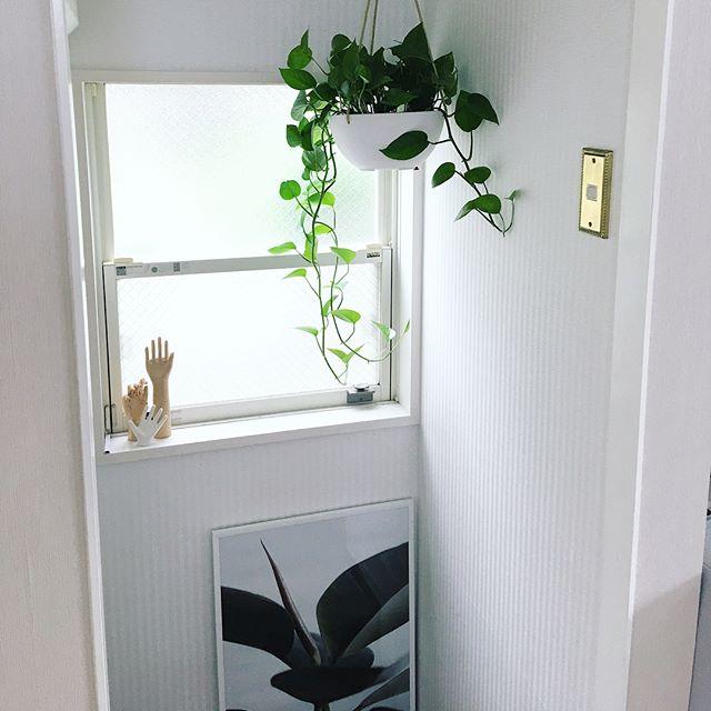 観葉植物特集65