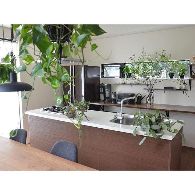 キッチン グリーン3