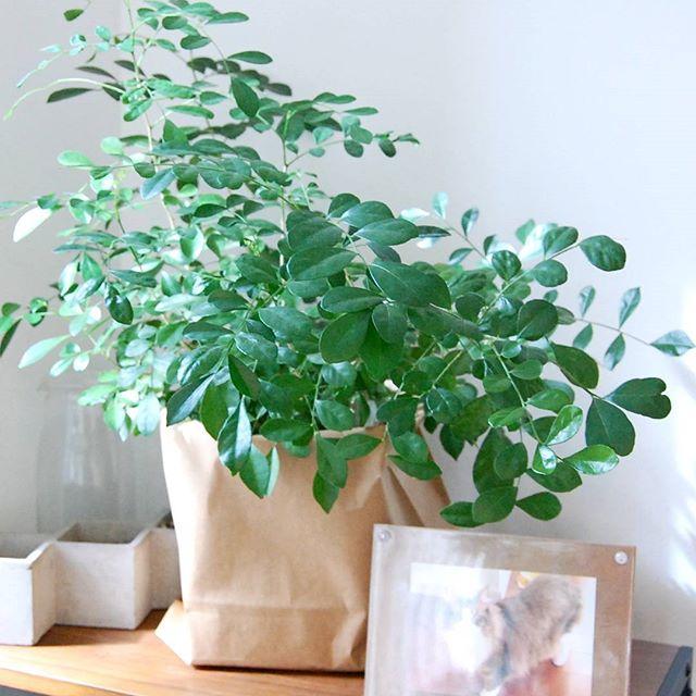 観葉植物特集56