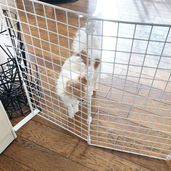 ダイソーのワイヤーネット 小型犬用仕切り2