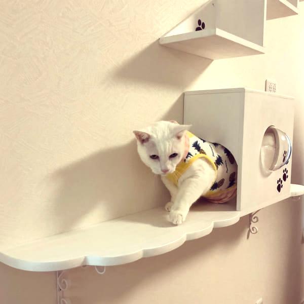 猫 インテリア2