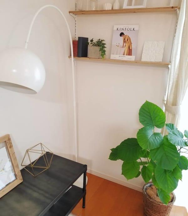 アイビー 観葉植物 ディスプレイ3
