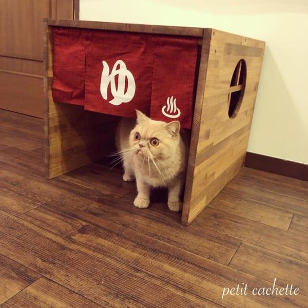 猫 インテリア5