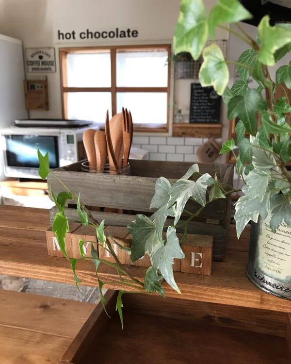 アイビー 観葉植物 ディスプレイ