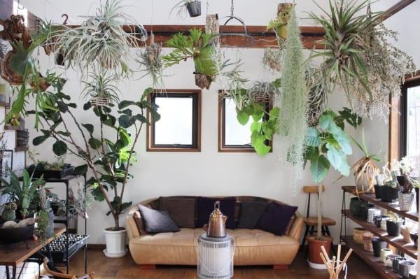 植物 部屋6