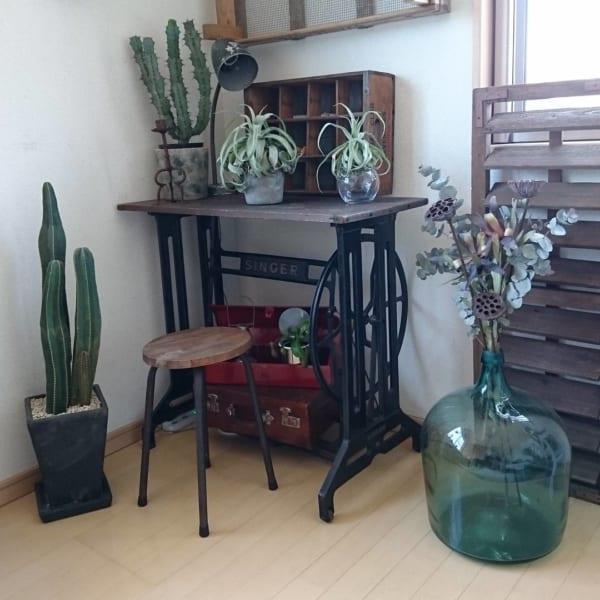 ヴィンテージインテリア 観葉植物2