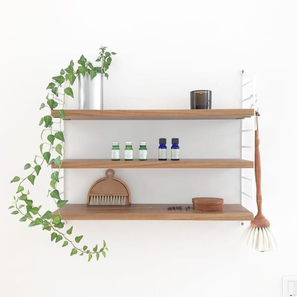 アイビー 観葉植物 ディスプレイ10