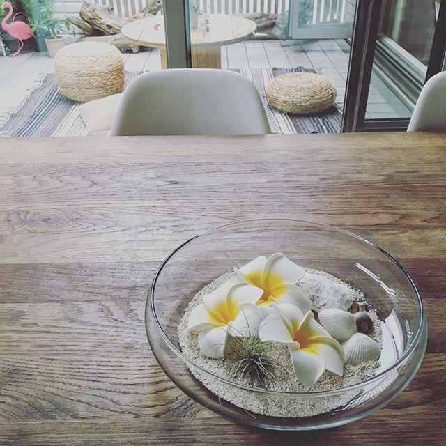 カールした葉がおしゃれなエアープランツ「チランジア」2