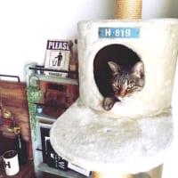 大切な家族のためにそろえたくなっちゃう♪可愛い猫用インテリア特集