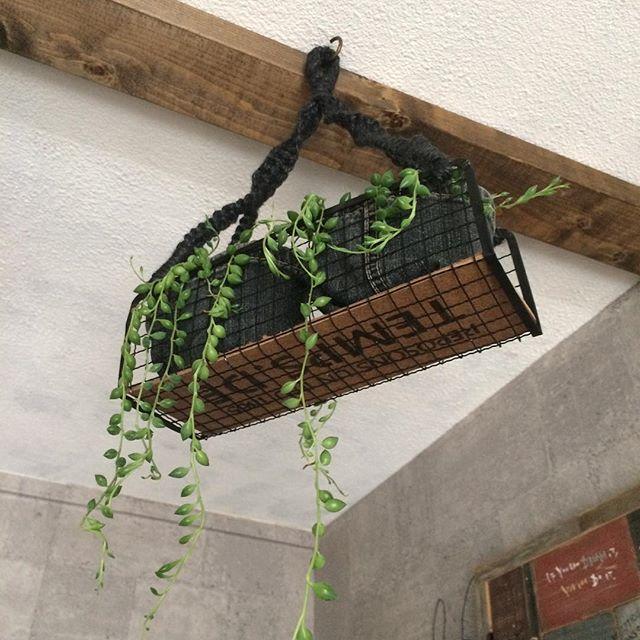 焼き網を観葉植物と組み合わせる2