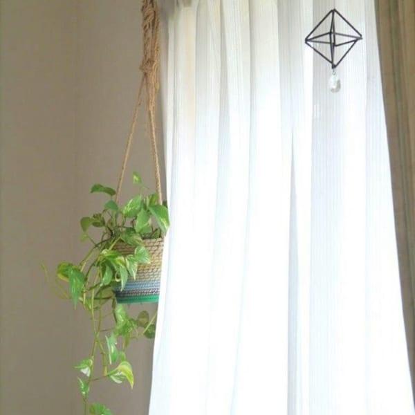 植物 花 ハンキング3
