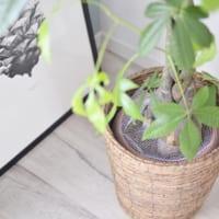 オススメの観葉植物の育て方5選と初心者さんでも簡単に出来る植物の飾り方
