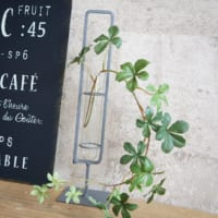 《植物》をオシャレに飾ろう☆グリーンの魅力でアップデートするインテリア特集!