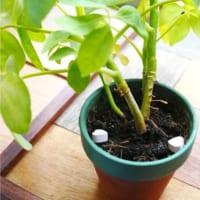 簡単な腐葉土の作り方をご紹介!落ち葉を使った自家製腐葉土にチャレンジ