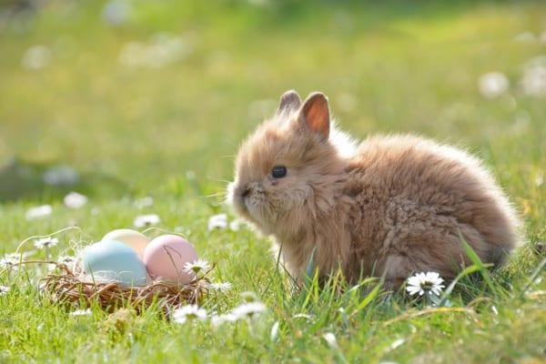イースター うさぎ 卵