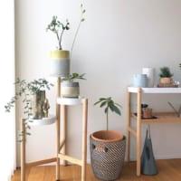 緑をより一層楽しむ♪おすすめの鉢やフラワーベース、植物の飾り方をご紹介