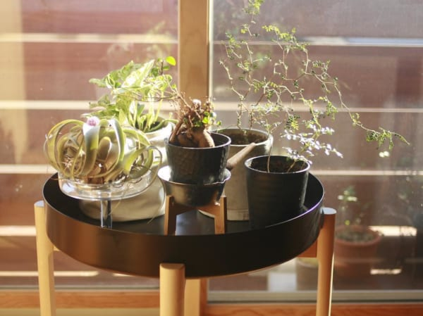 植物 花 鉢12
