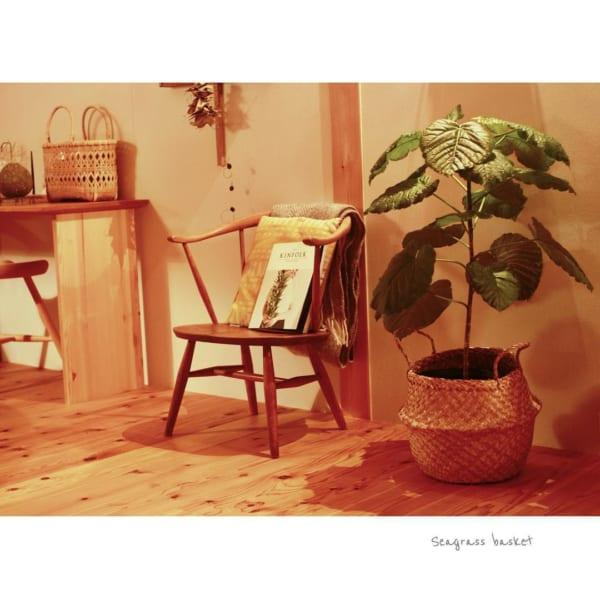 植物 花 鉢13