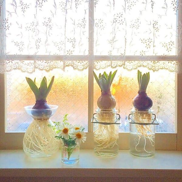 お花 ディスプレイ 花瓶 ヒヤシンス