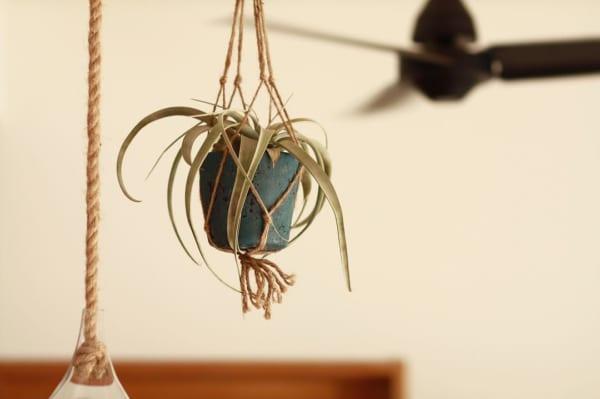 植物 花 ハンキング2