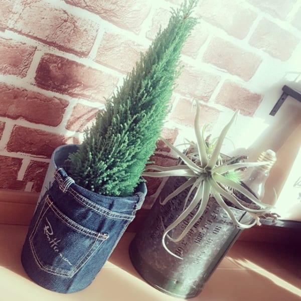 植物 花 鉢3