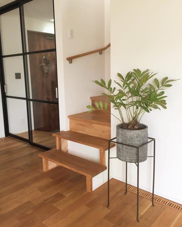 植物 花 鉢5