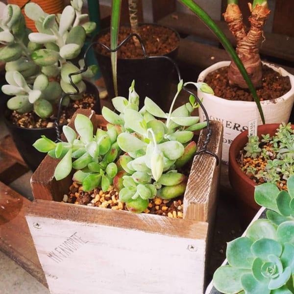 多肉植物 鉢 DIY