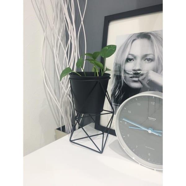 植物 花 鉢6