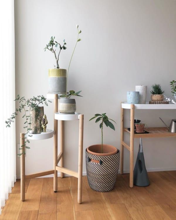 植物 花 鉢7