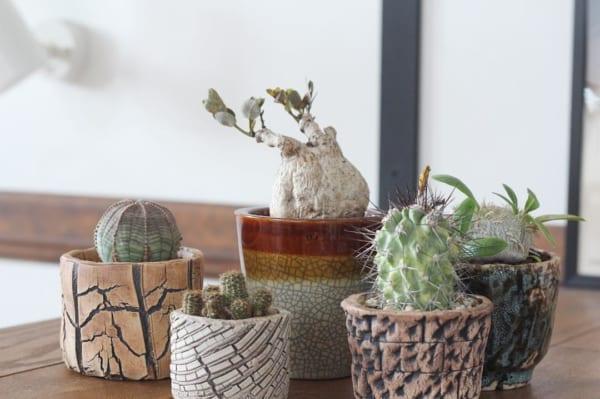 植物 花 鉢8