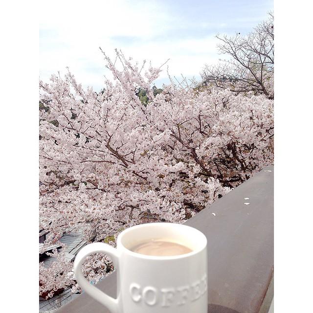 春を楽しむ方法 花見