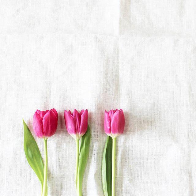 ガーデニング 初心者 おすすめの花