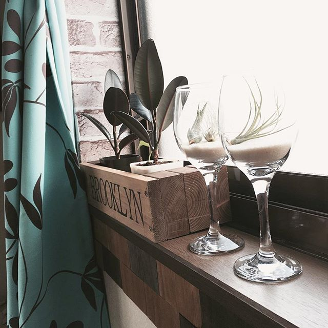 ワイングラス テラリウム エアプランツ